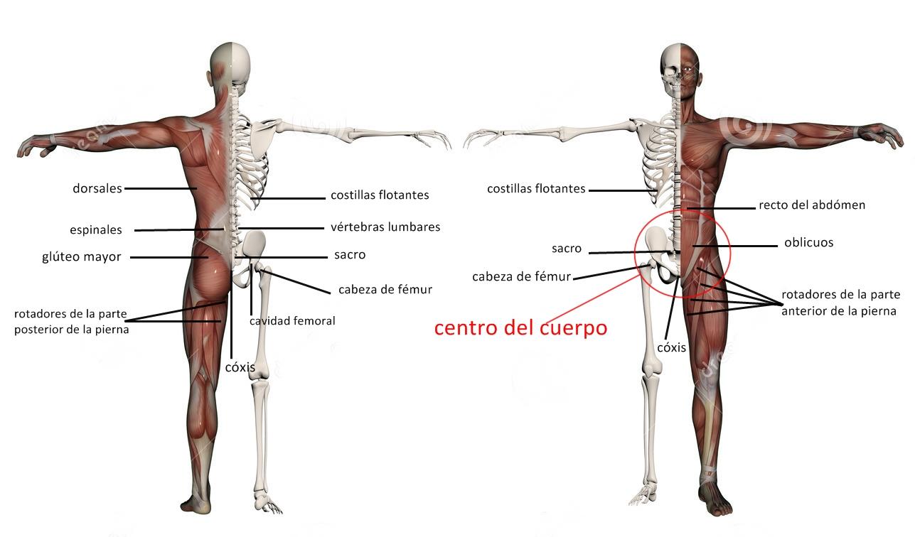 Moderno Gráfico De Músculo De La Pierna Bosquejo - Imágenes de ...