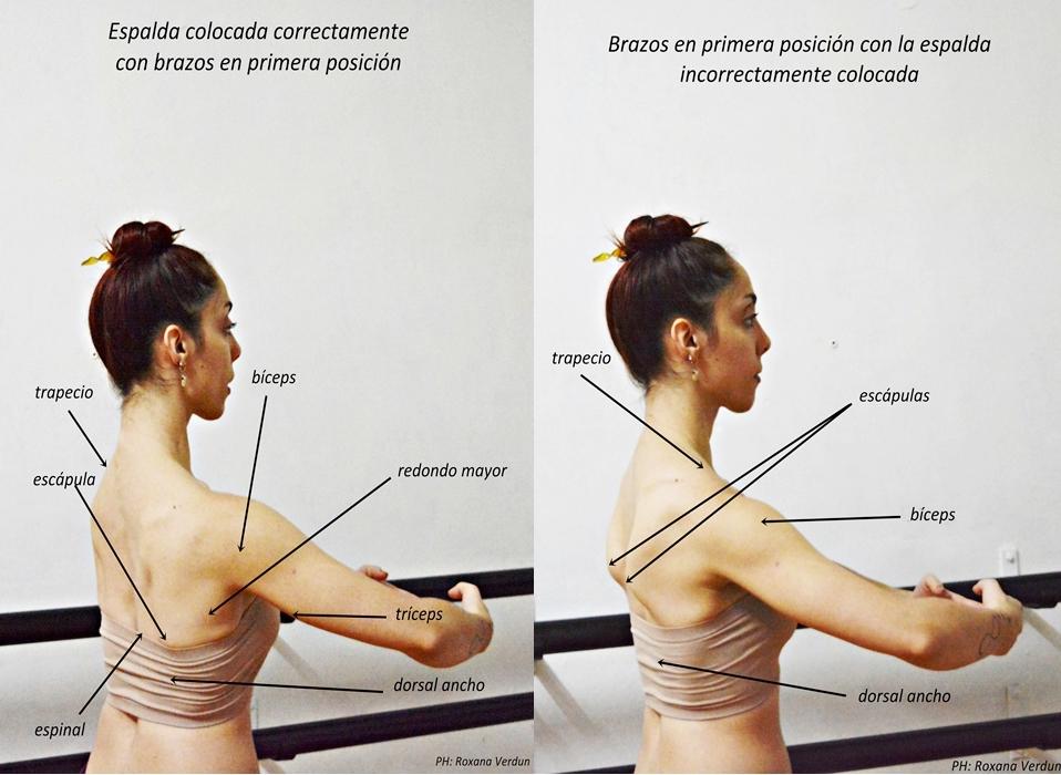 El torso: espalda, brazos, alineación y fuerza muscular | Revol ...
